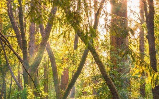 California Photographer, Scenic, Scenic Photography, Scenery, Photography, California, California Photography